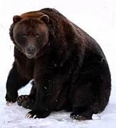 クマと対等に渡り合うには