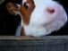 酪農・畜産初心者の会