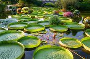 草津市立 水生植物公園 みずの森