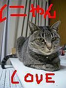 ☆にゃんともかんとも猫がすき☆