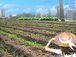 神奈川・関東で農業!