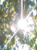 太陽アレルギー