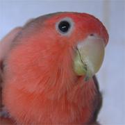 やっぱり鳥が好き(ゲイonly)