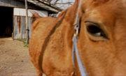 馬を庭で飼う