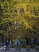 2007年度入学 山形大学