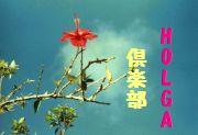 沖縄同盟 HOLGA倶楽部
