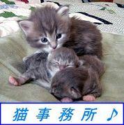 猫事務所♪