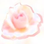 バラの匂いがだいすき。