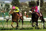 競走馬(競馬)の画像