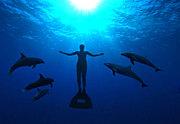 イルカ漁反対! いるか漁反対!