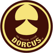 ★DORCUS TOP BREEDING SYSTEM★