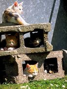 猫の棲む家
