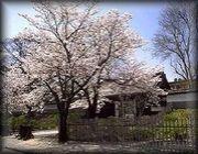 長野県上田高等学校