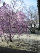法隆寺の四季
