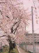 仙台市立愛宕中学校を守ろう会