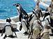 ペンギン族
