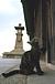 鞆の浦の猫