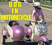 バイクと犬、それは人生