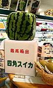関西学院大学 社会教育実習