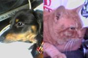 イヌ、ネコどっちも派