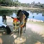 酒と泪と男とお馬