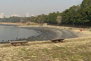 東京湾ハゼ釣りオフ