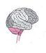 私立脳みそ研究所