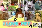 愛 LOVE♥PET