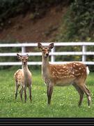 鹿肉愛好会