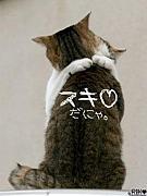 ネコ好き集合
