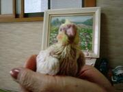 【近畿・関西】迷い犬/猫/鳥探し