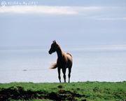 九産大 Horse Riding Club☆