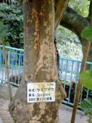 宮崎県人会沖縄支部