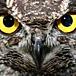 OWL (アウル) osaka