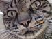 猫の鼻は魔法のボタン。