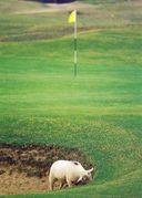 平日でお安くゴルフ(関東版)