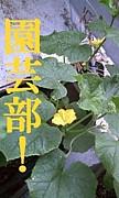 園芸部!(えんげーぶ!)