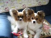 Dog salon Jurian