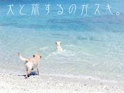 犬と旅するのがスキ。