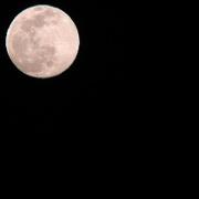 月を見る人。