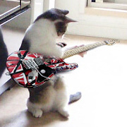 The Cat who....猫のアイシス