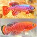 Wonder fish