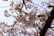 お花畑やお花を見に行こう!!