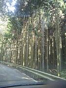 関西の山道走りたぃ☆ミ