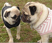 We♡PUG in長野
