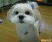 MIX犬 集まれ〜〜ぃ!