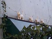 猫町カフェ29
