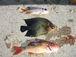沖縄魚突き人