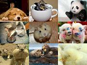 動物大好き全員集合♡