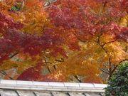 誰も知らない京都